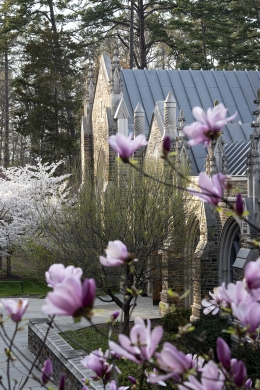 Photo of exterior of Divinity School and tulips blooming.